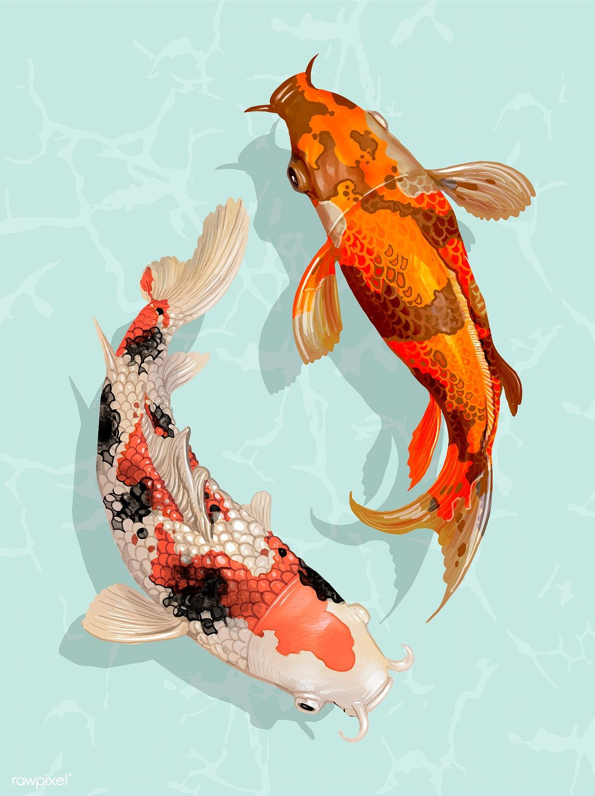 Two Japanese Koi fish swimming | free image by rawpixel.com