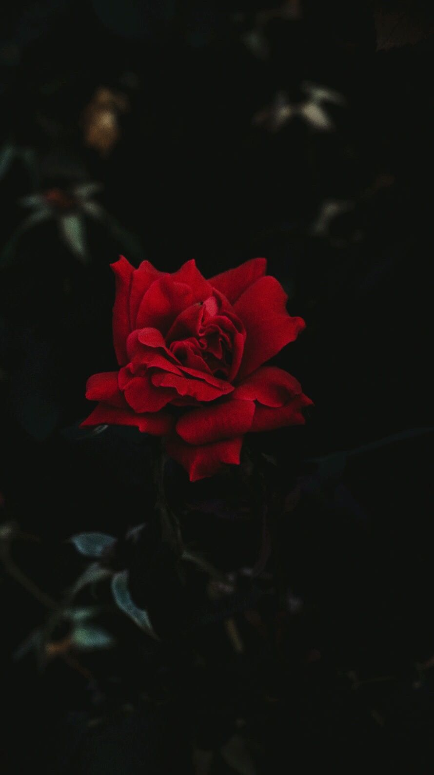 Pin Oleh Lovesick Rat Di Wallpapers Poster Bunga Lukisan Bunga Latar Belakang