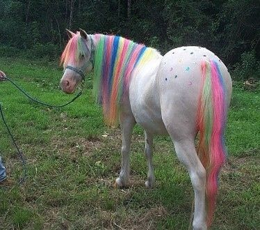 It's missing its horn, but I think this is as close to a rainbow unicorn we're going to get.