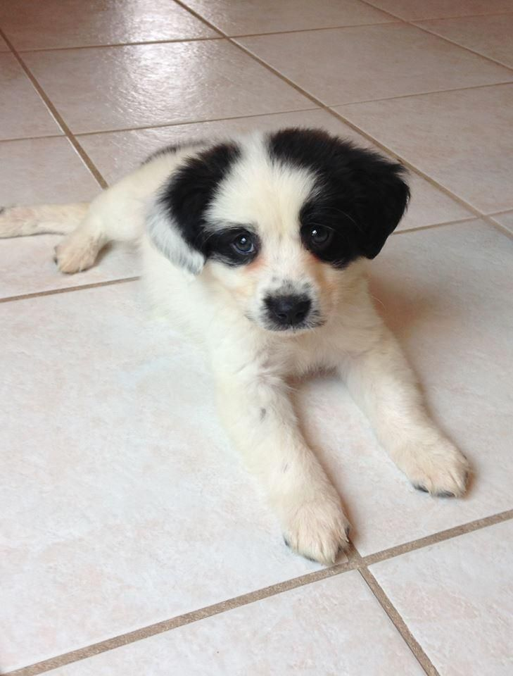 Adopt Willow On Smartest Dogs Puppies Cute Animals
