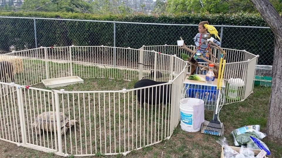 Our Petting Zoo Set Upone of the birthday boys at one of