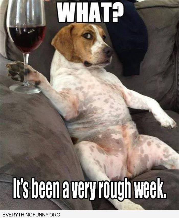 Funny Dog Pictures Drinking Wine What Its Been A Rough Day Owls - 49 hilarious pictures people animals