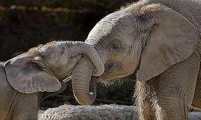 Resultado de imágenes para ANIMALES maternales