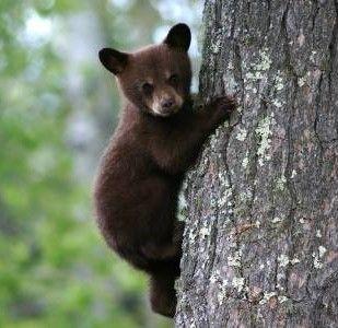 Adorable Cub In Tree