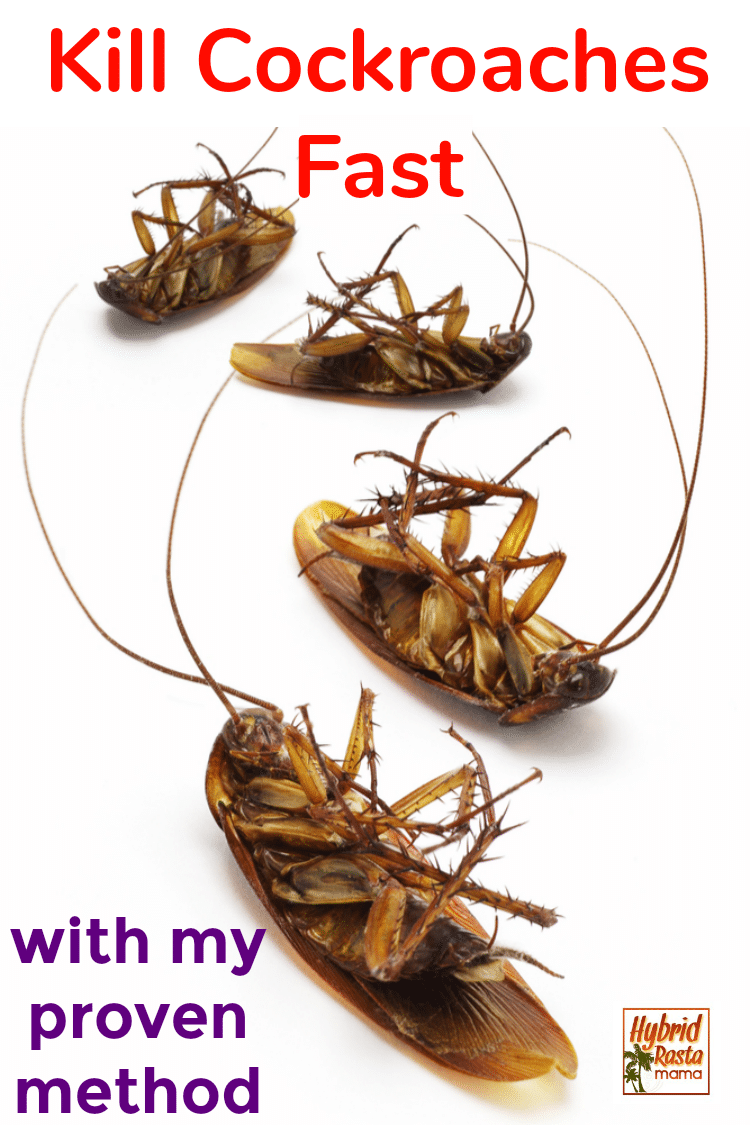 Pin On Garden Pest