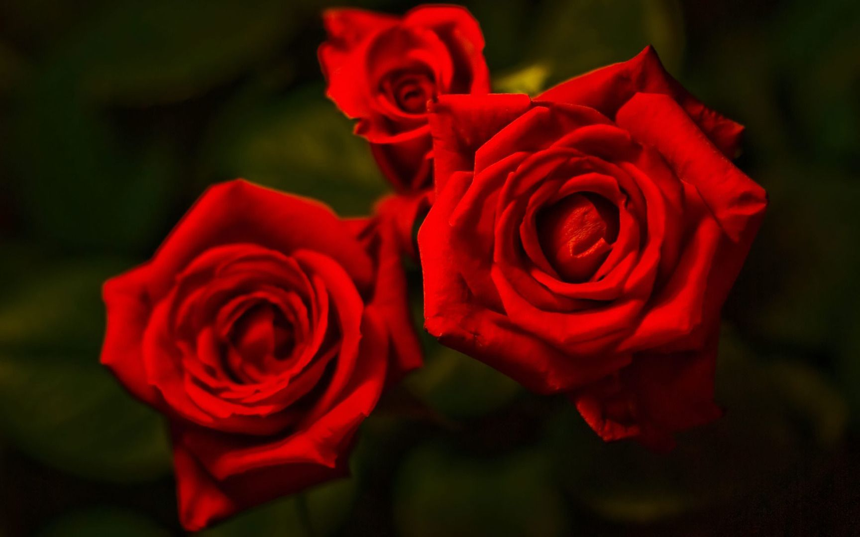 Wallpapers For Red Rose Wallpaper Pattern