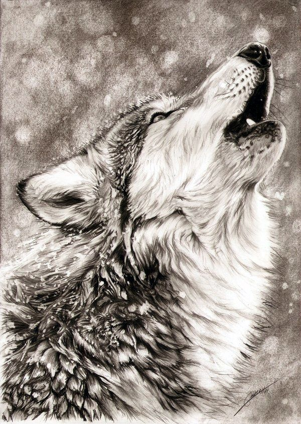 Realistic animal pencil drawings 7