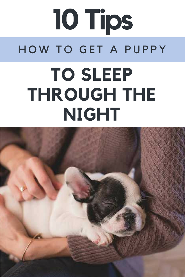 How To Get A Puppy To Sleep Through The Night 10 Tips How To Train Your Dog Training Your Puppy Best Dog Training Puppy Training