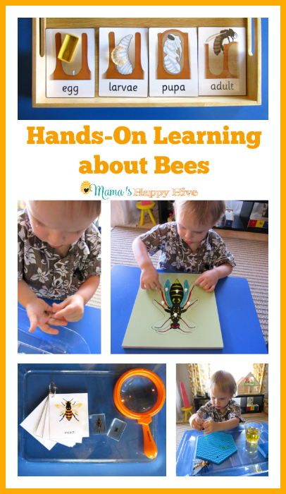 Hands-On Learning about Bees - Mama's Happy Hive
