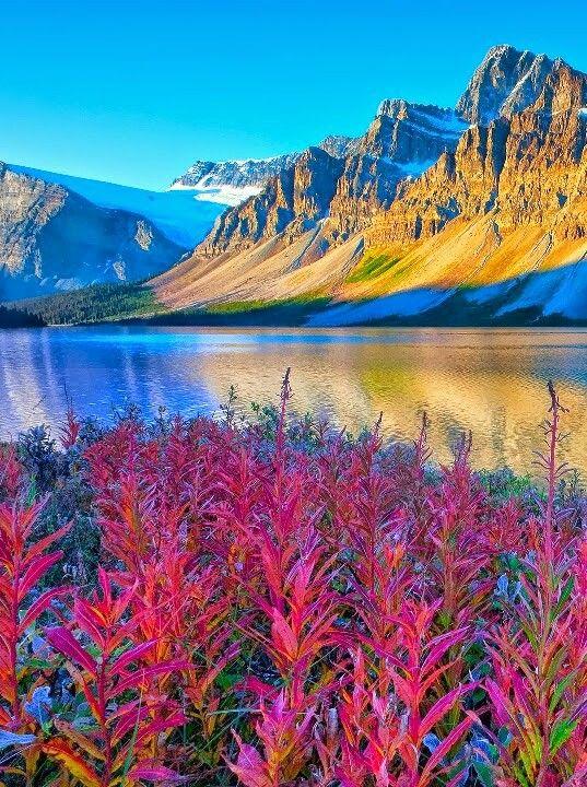 Осенняя красота | Фотографии природы, Идеи озеленения ...