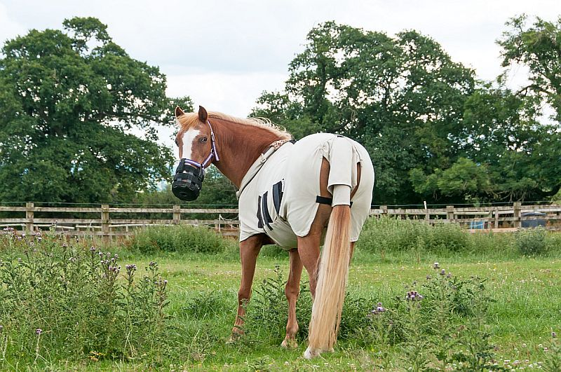 Keeping the pests away a guide to horse fly masks