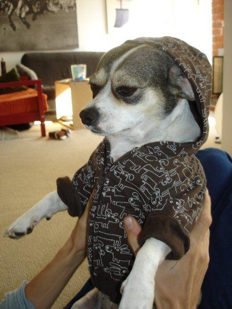 #cutedog #doghoodie
