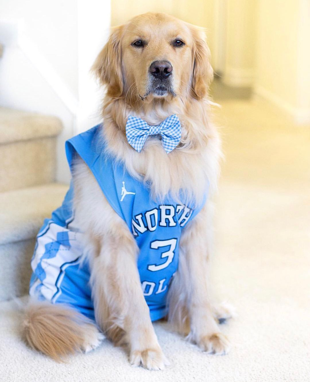 These Tar Heel Pups Are Looking Spiffy And Spirited For