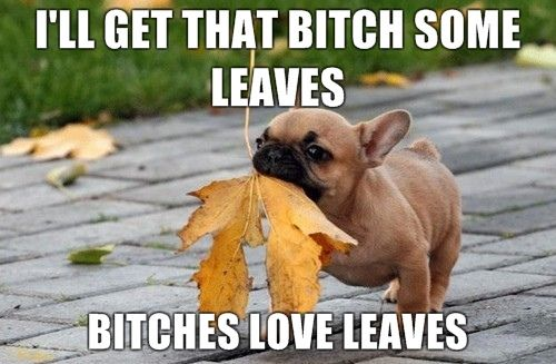 Bitches love leaves
