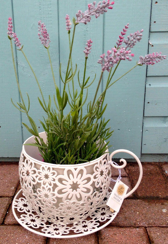 Shabby Vintage Chic Tea Cup Planter Plant P*T Holder 400 x 300