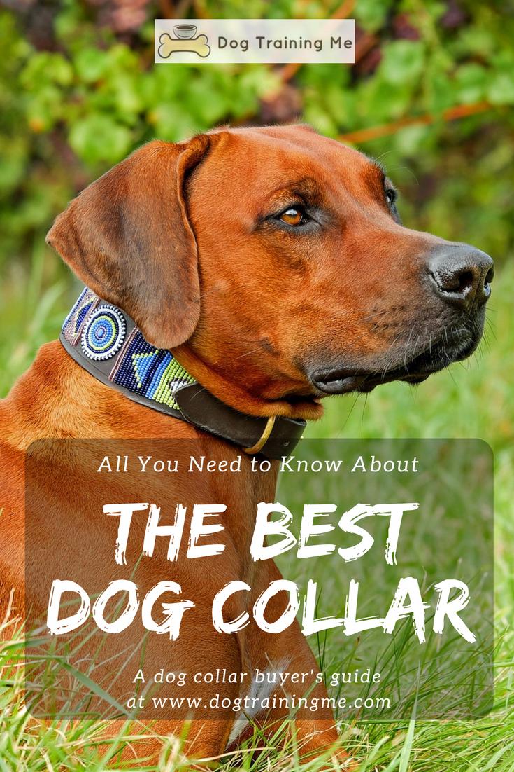 ,000 Dog – Do I Need Special Dog Training?