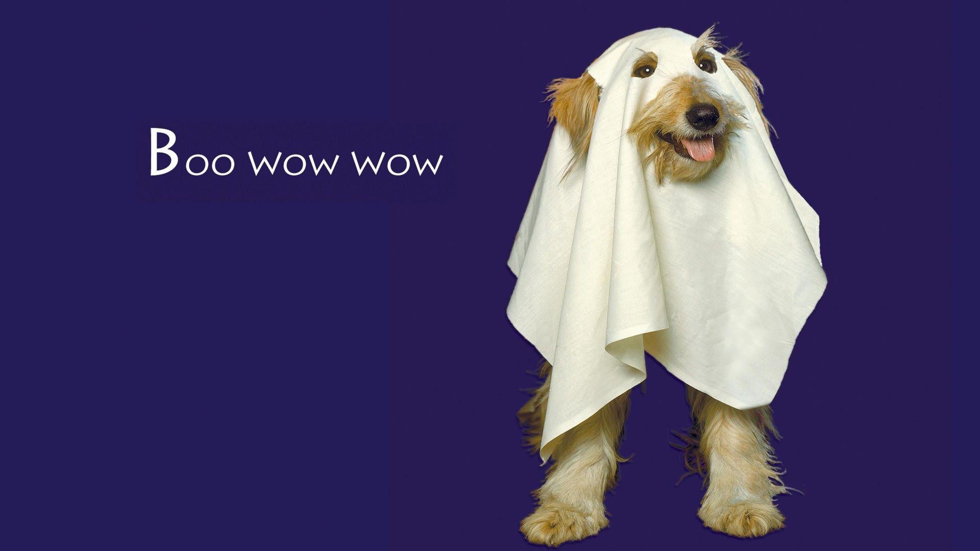 Download Wallpaper Halloween Puppy - f228e035d9ce01704f948675abfb6d57  Snapshot_217844.jpg