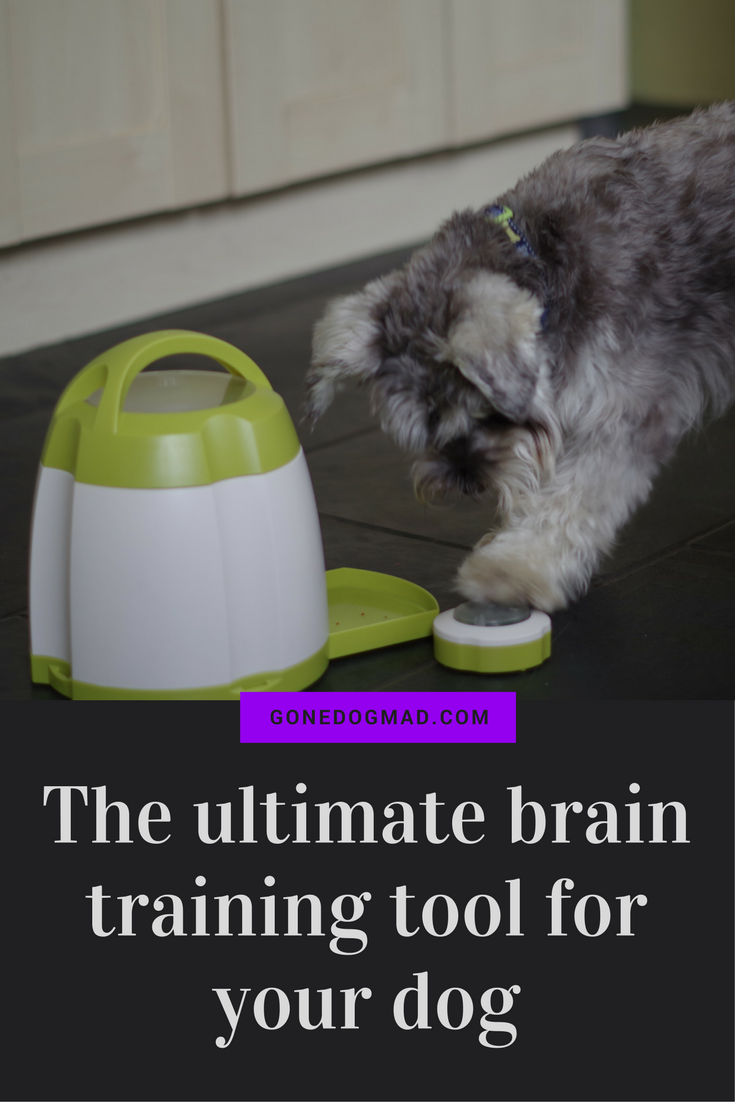 Brain Games For Dogs Trixie Dog Activity Memory Trainer Review Brain Games For Dogs Dog Activities Dogs