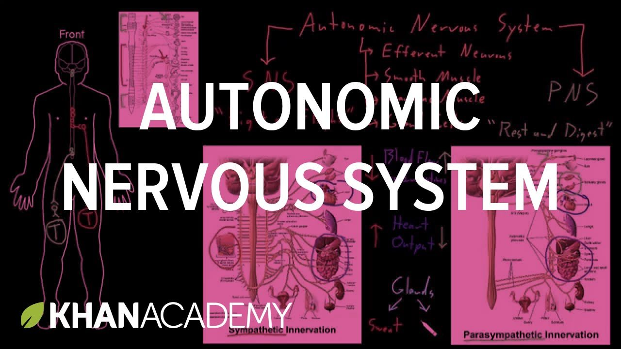 This is a helpful video in summarizing the entirety of the autonomic ...