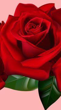 Czerwona Róża W Grafice Czerwona Grafice Róża