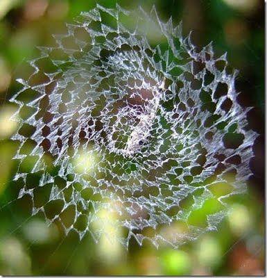 zig-zag spider web