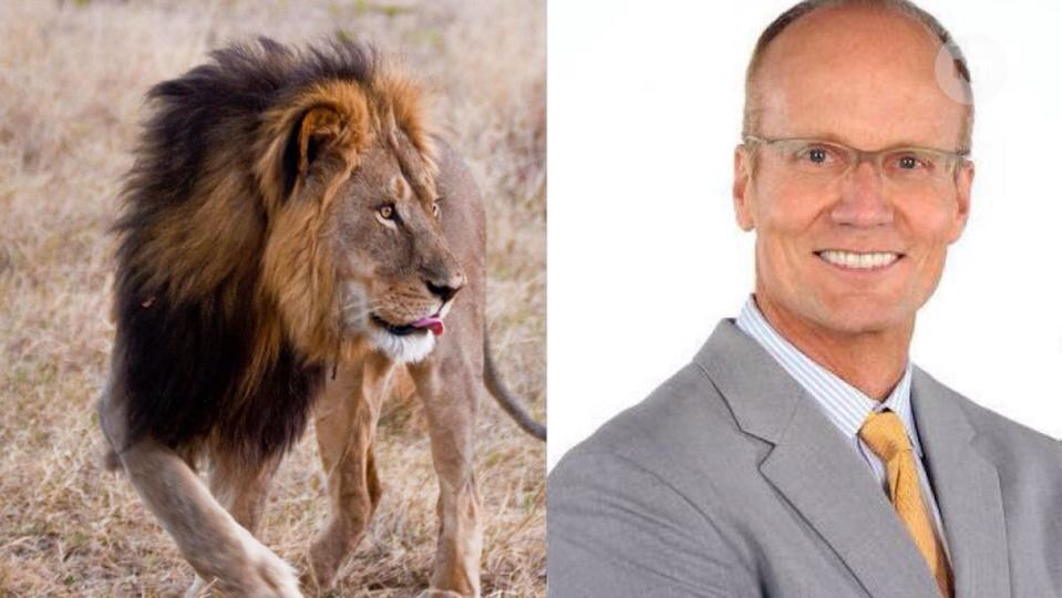 Who is dentist Walter James Palmer who killed Cecil the lion? Read more on today's blog.   http://www.mydochub.com/blog/index.php/2015/07/30/who-is-dentist-walter-james-palmer-who-killed-cecil-the-lion/  #CecilTheLion #WalterPalmer #petition #lionkiller #mydochub #blog
