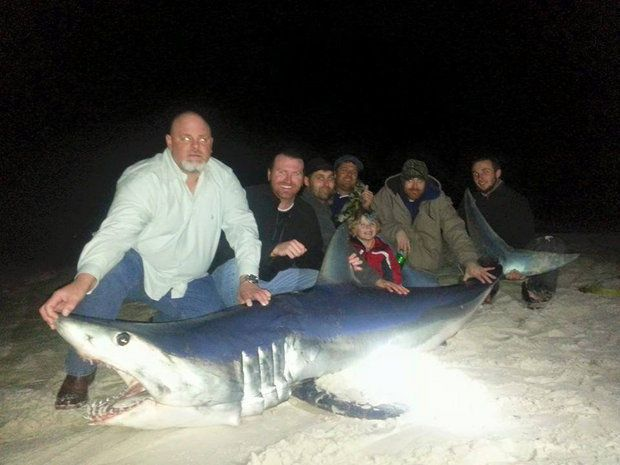 Louisiana Outdoors Shark Fishing Shark Fishing Photo