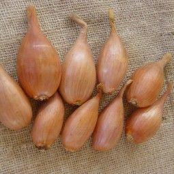 Planter l'ail, l'échalote et l'oignon | Bordure jardin ...