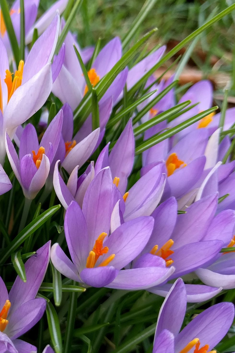 The Surprising Meanings Behind Your Favorite Flowers
