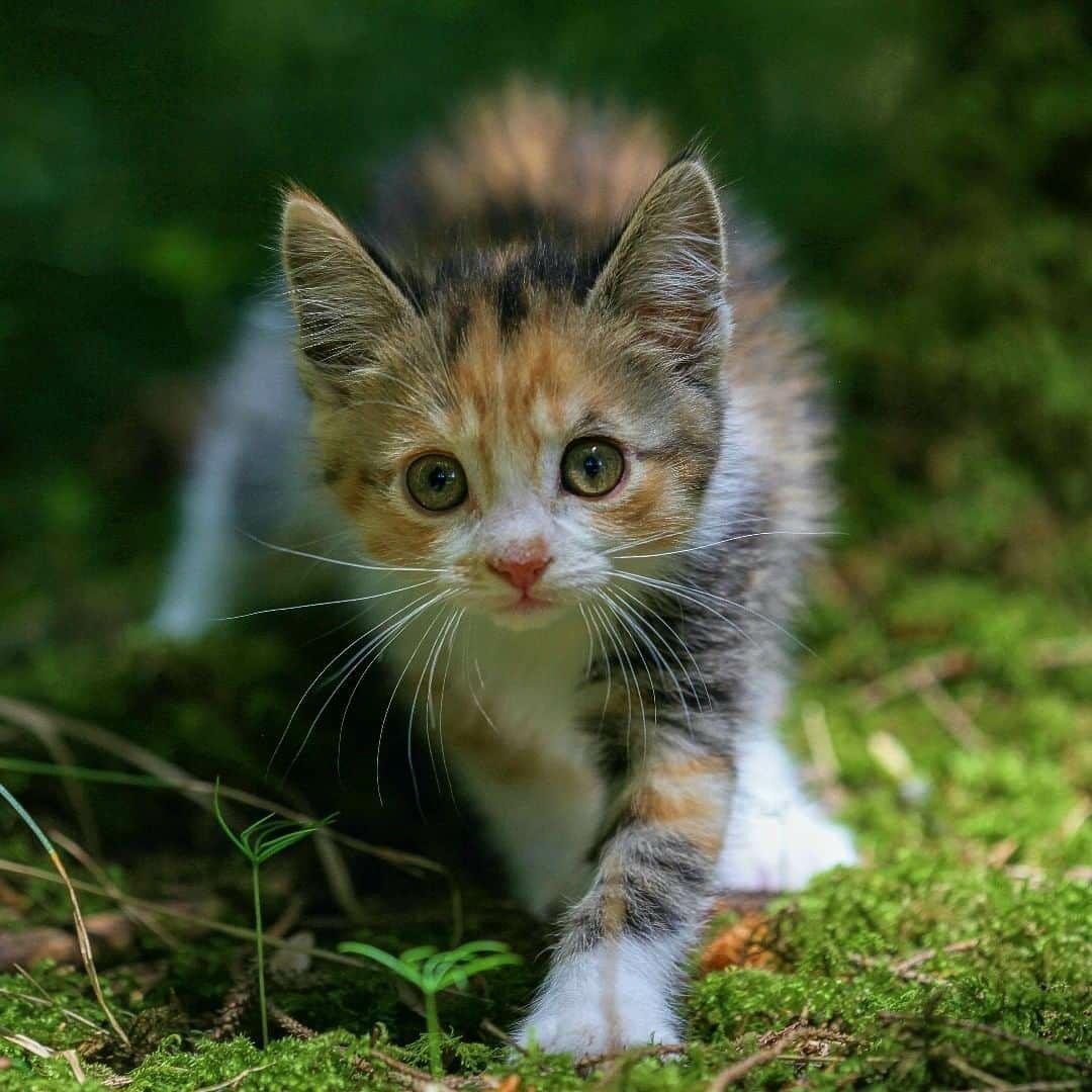 Cats protection, crawley Cats, Animals, Crawley