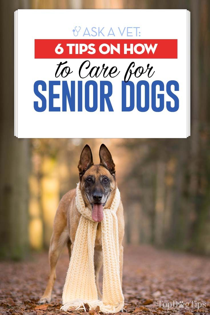 6 vets tips on how to care for senior dogs dog