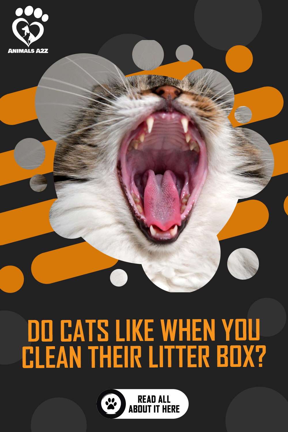 Do Cats Like It When You Clean Their Litter Boxes Detailed Answer In 2020 Cat Facts Litter Box Cat Questions