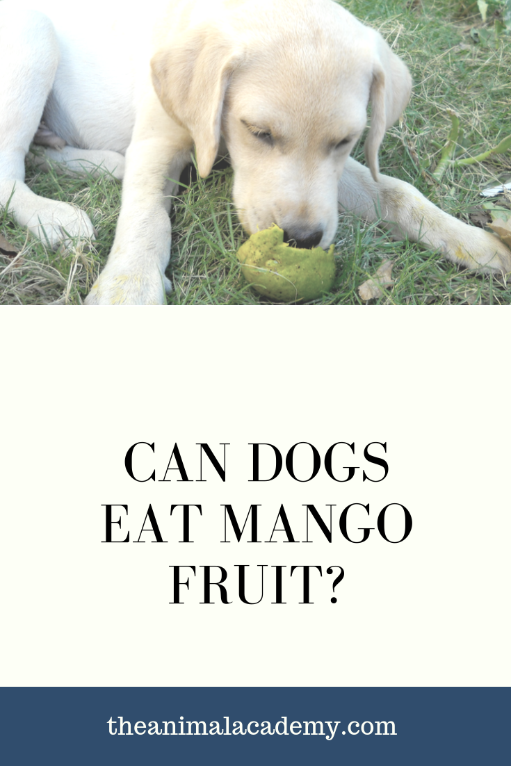 Can A Dog Eat Mango Do Dogs Eat Mangoes What Fruits Do Dogs Eat Can Dogs Eat Dog Eating Dogs