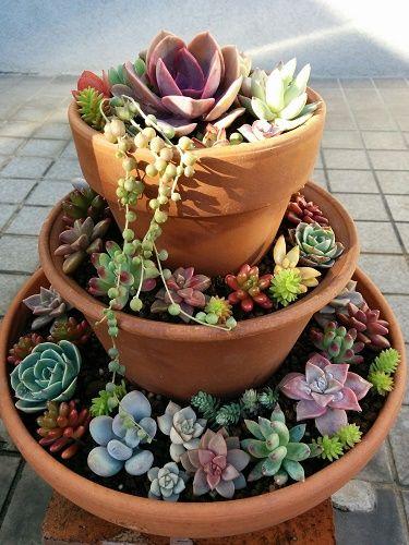 多肉植物のタワー1号 多肉植物の庭 多肉植物のテラリウム 多肉
