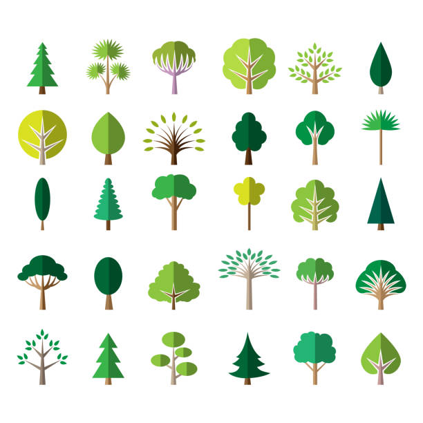 Flat Tree Icons Pine And Palm Oak And Ash Vector Illustration Tree Icon Tree Images Tree Illustration
