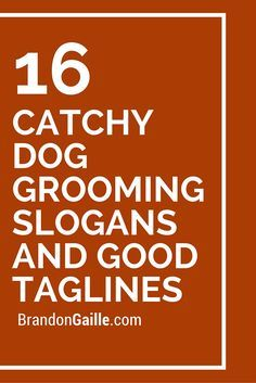 51 Catchy Dog Grooming Slogans and Good Taglines | it's just