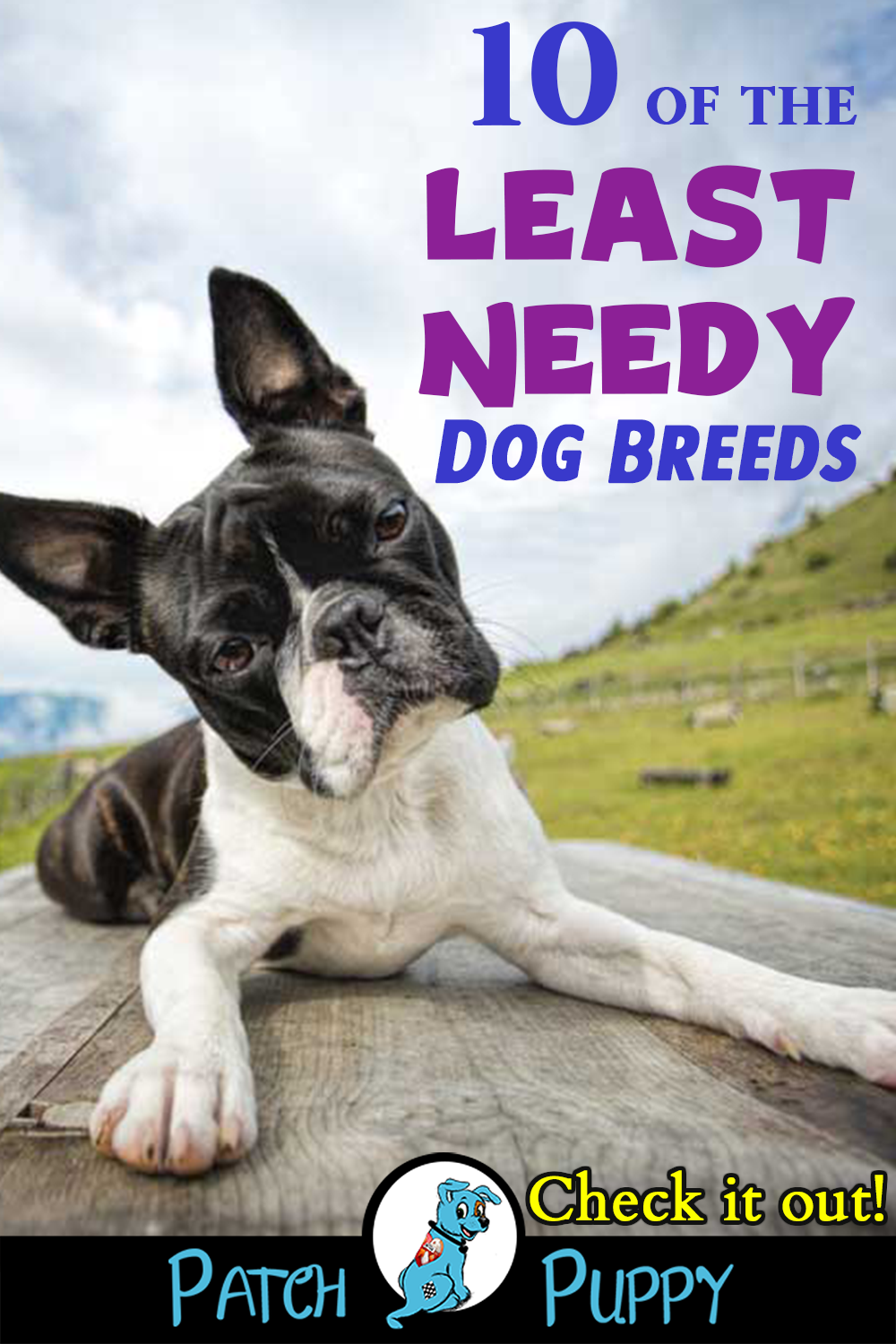 10 Of The Least Needy Dog Breeds You Ll Be Surprised Patchpuppy Com Family Dogs Breeds Dog Breeds Dogs