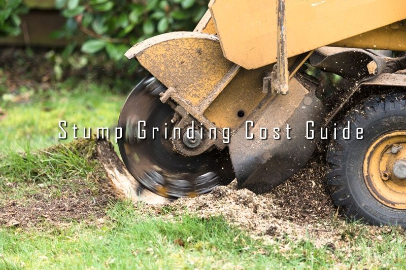 Arboristsnearme Provides The Complete Stump Grinding Cost Guide For The People Looking For The Stump Removal Servi Stump Removal Removal Services Types Of Soil