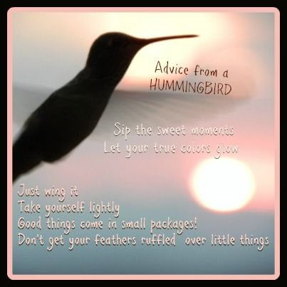 Advice from a hummingbird.