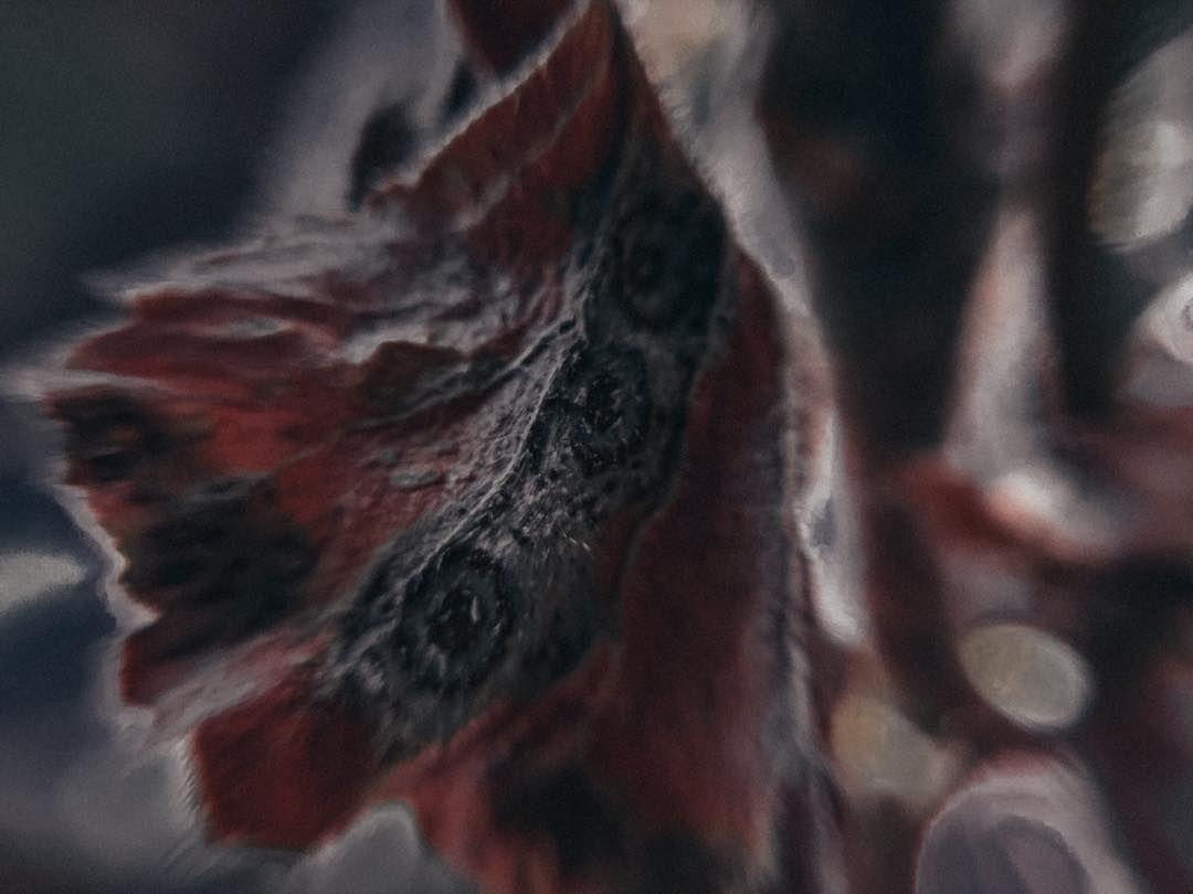 #macro #macrophotography #macro_captures_ #macrofotografia #macro_vision #macro_world #macro_drama #macro_addiction #macro_freaks #nature #naturephotography #naturelovers #nature_perfection #nature_good #nature_of_our_world #travel #travelphotography #flowers #flowerstagram #flowers #flower_saddict #flowers_lovers