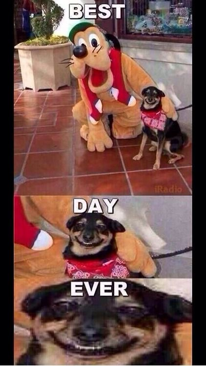 Best Day Ever Funny Animal Pictures Funny Pictures Bones Funny