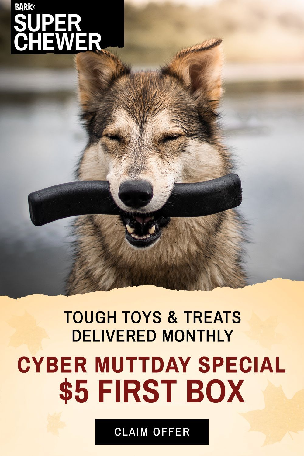 For just 5 you can get your dog a box full of tough toys treats and chews Limited time Cyber Muttday Special Shop Now The Legacy List 2019shopping