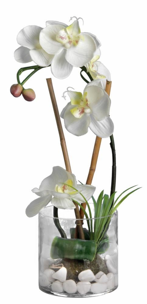 orchid e blanche 36cm avec vase en verre sur jardindeco fleurs pinterest orchid es. Black Bedroom Furniture Sets. Home Design Ideas