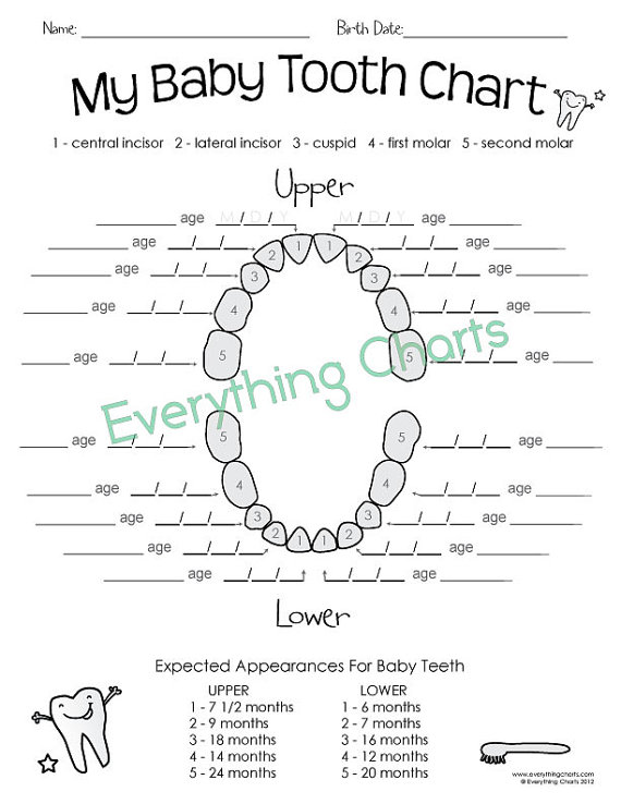 Baby Tooth Chart  Printable  Kids    Tooth Chart