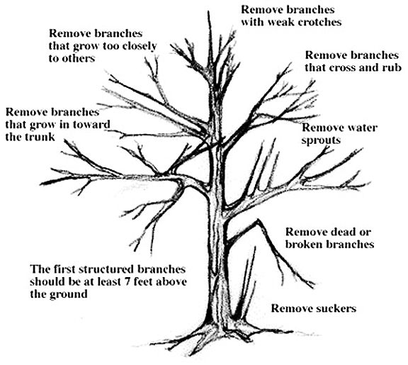 Tree-specific reasons for pruning. (click in image to see
