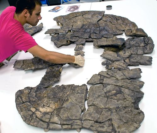 60-million-year-old giant turtle