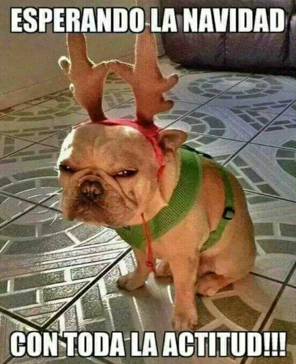 Feliz Navidad Felices Navidades Graciosas Navidad Humor Chistes De Navidad