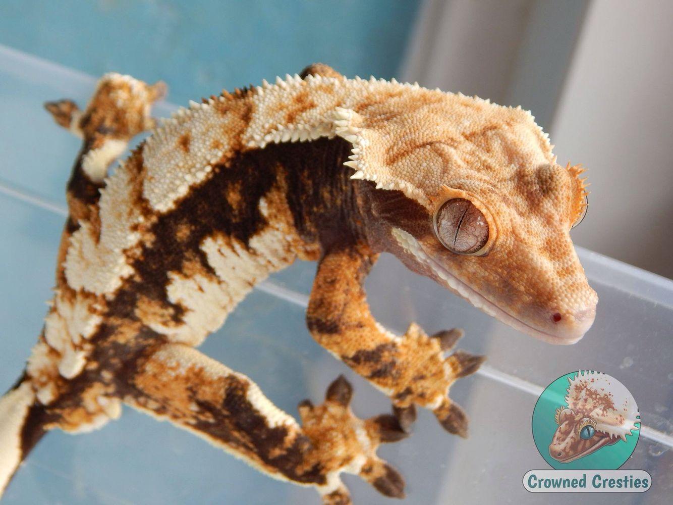 Jaraxxus   Reptiles   Pinterest
