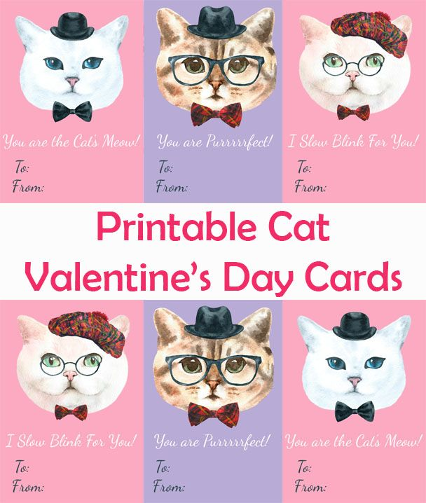 Printable Cat Valentine\'s Day Cards   Cat lovers, Cat and Cards