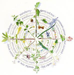 Medicine garden wheels